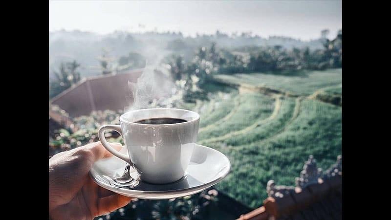 kopi termahal - minum kopi