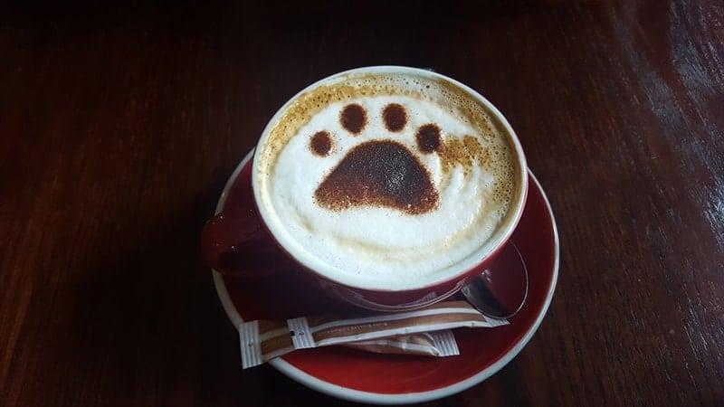 cara membuat kopi yang enak ala cafe - latte