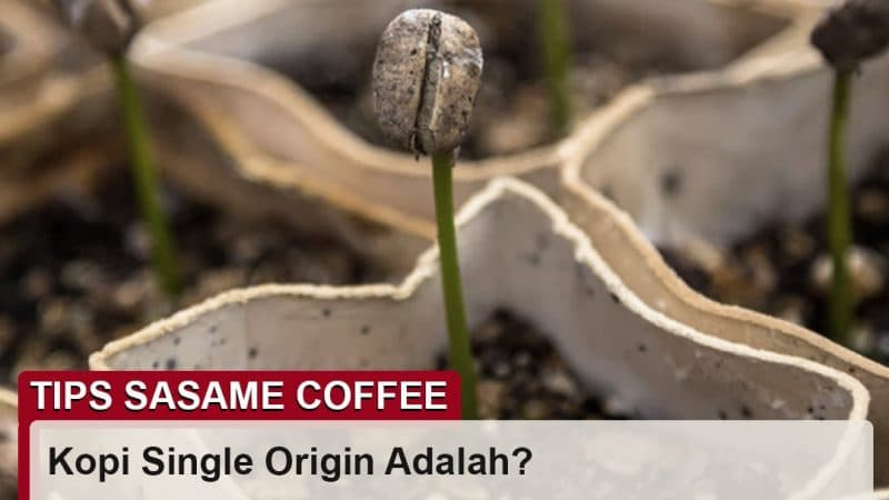 tips sasame coffee - kopi single origin adalah