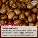 tips sasame coffee - kopi lanang adalah