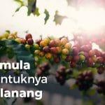 kopi lanang - asal mula terbentuknya kopi lanang